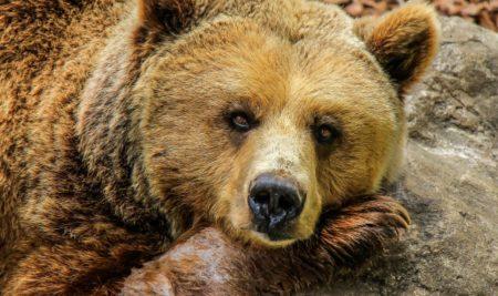 Bärenmarkt abgesagt?